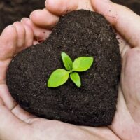 Is Cremation Environmentally Friendly Compared to Traditional Funeral Services?